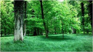 pylli_dhe_zeri_i_drureve